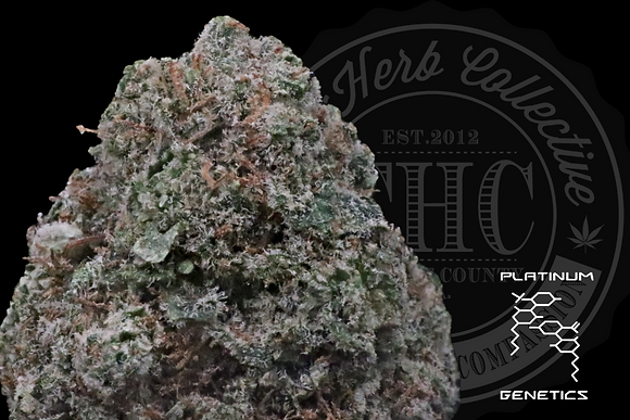 MENDO LIME | TOP SHELF | PLATINUM GENETICS