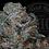 Thumbnail: SWEET TOOTH OG 27.2 % | RESERVE | ROSEZ CO.