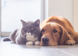 CBD For Pets: How To Dose It?