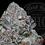 Thumbnail: DEADHEAD PIE | TOP SHELF | ROSEZ CO.