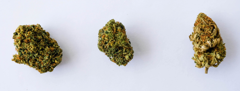 What are hybrid strains of cannabis like