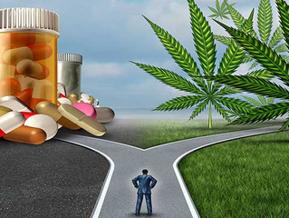 Painkiller Deaths Down in States where Medical Marijuana is Legalized
