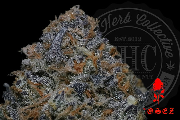 SUNDAE STALLION 24.6% | TOP SHELF | ROSEZ CO