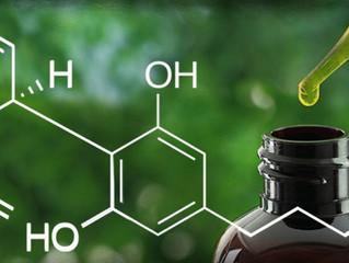 CBD May Be Healthier Than Regular Marijuana