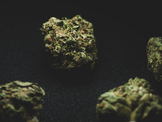 5 Cannabis Strains to Help You Stay Productive this Spring