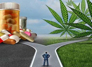 Can Marijuana Help The Opioid Crisis?