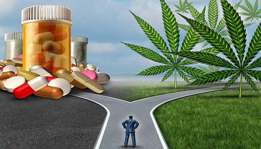 Can Marijuana Solve The Opioid Crisis