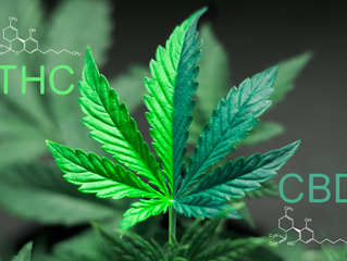 THC vs CBD: Whats the Difference?