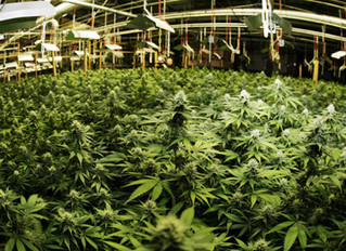 Why The War On Medical Marijuana Is Almost Over