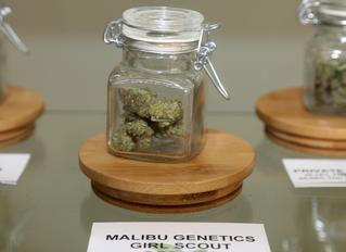 Best Marijuana Collectives in California