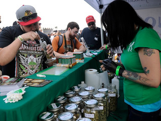 Best Cannabis Festivals In California