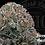 Thumbnail: ORANGE SUGAR COOKIES | POPCORN NUGS | FIRESTORM | 20.1%