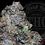 Thumbnail: GARLIC BUTTERSCOTCH 28.1%  | EXOTIC | ROSEZ CO.