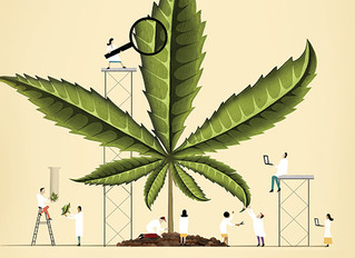 The 3 Most Important Marijuana Research Studies of 2018