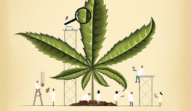 marijuana research studies