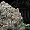 Thumbnail: GHOST TREE | CONNOISSEUR | PHUTURE CULTIVATION | 23.7%