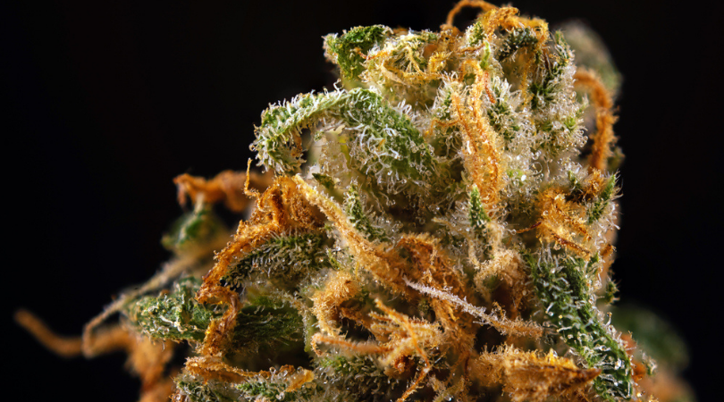 What Are Cannabis Terpenes And What Do They Do