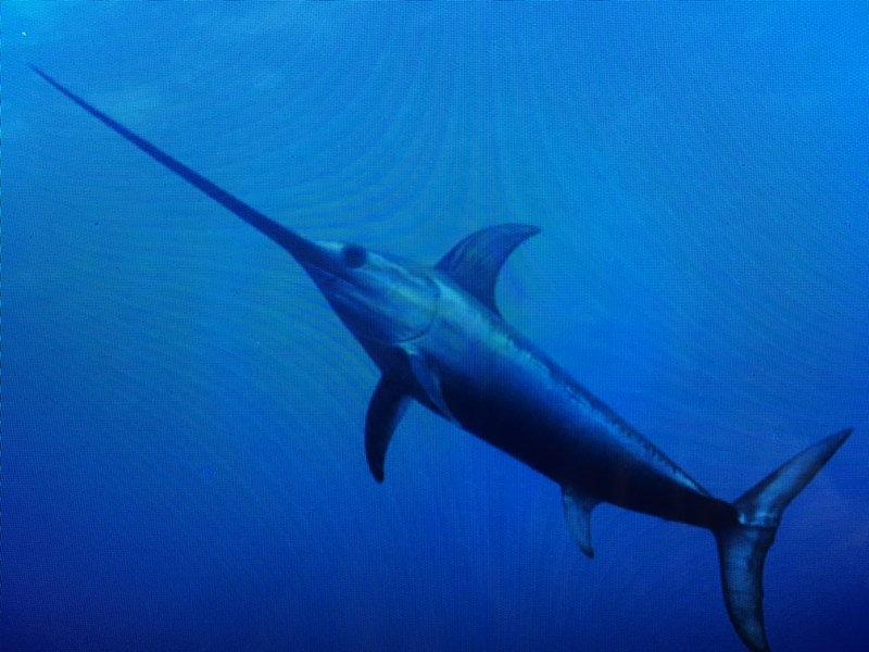 Full-Day Swordfishing Charters