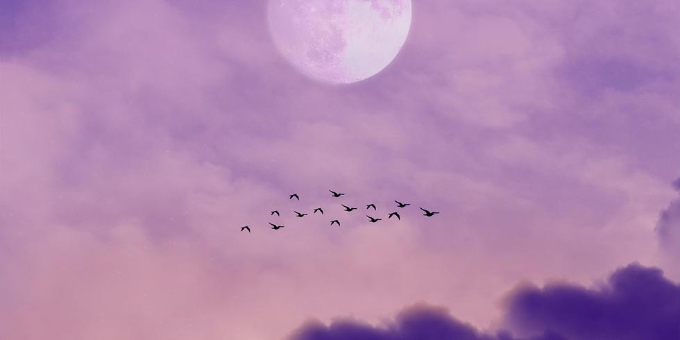 October Full Moon Breathwork Healing Journey