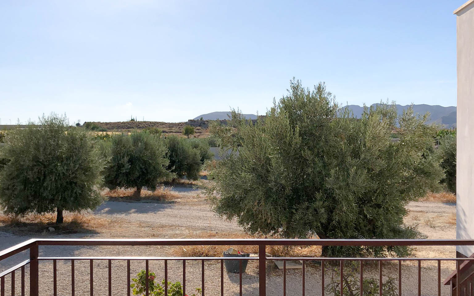 Vivienda en Mahoya. Casa entre olivos en Abanilla. Olivar
