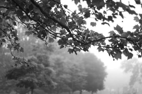 Fog.2010