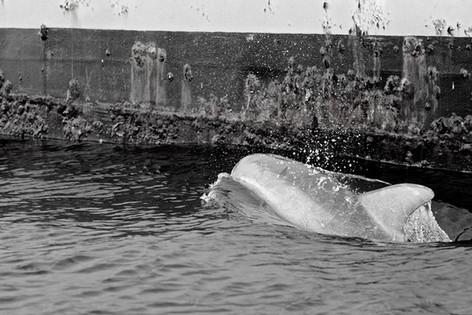 Dolphin.SC.2014