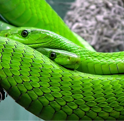 Biomimétisme Tribologie Article.png