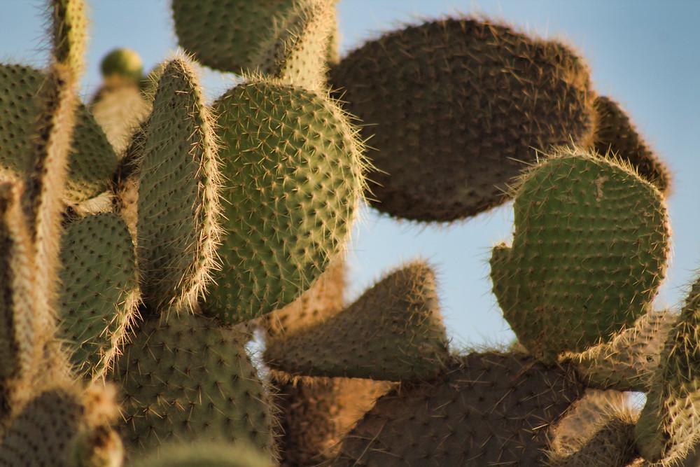 Cactus et biomimétisme : un solution contre le réchauffement climatique ?