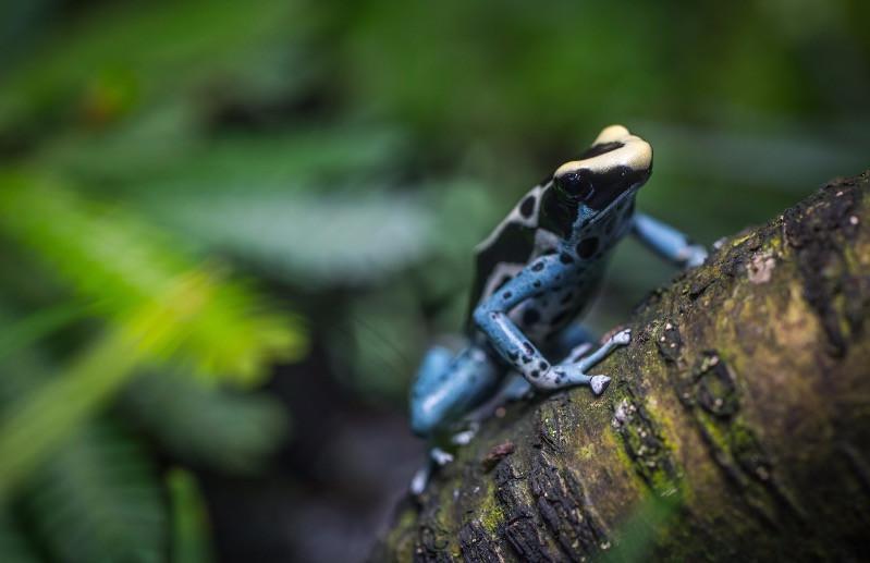Biodiversité définition biomimétisme