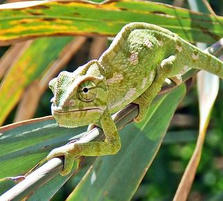 Biomimétisme Biologie Défense.png