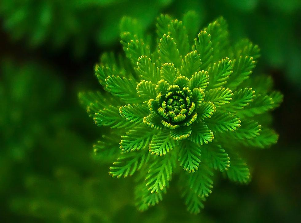 Biomimétisme Vision Bioxegy.jpg