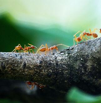 Biomimétisme Nature Transport.jpg