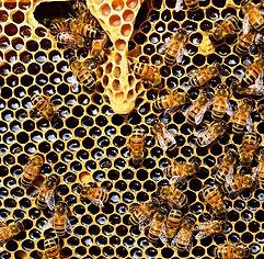 Biomimétisme Acoustique Bruit Article.jp