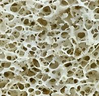Biomimétisme Structures Lighweight Desig