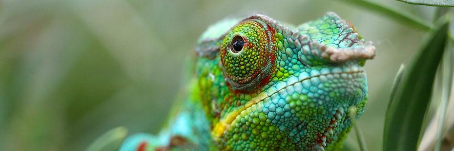 Chameleon_edited_edited.jpg
