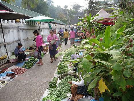 Swisstourer tourisme à vélo tour à vélo bike packing cycliste Tradition bouddhisme nature Vientiane Luang Prabang fleuve Mékong cols et montagnes 4000 îles ambiance détendue nature