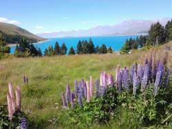 Bike Touring New Zealand