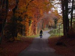 Autumn colours in Switzerland
