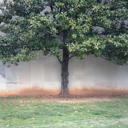 mtsu tree