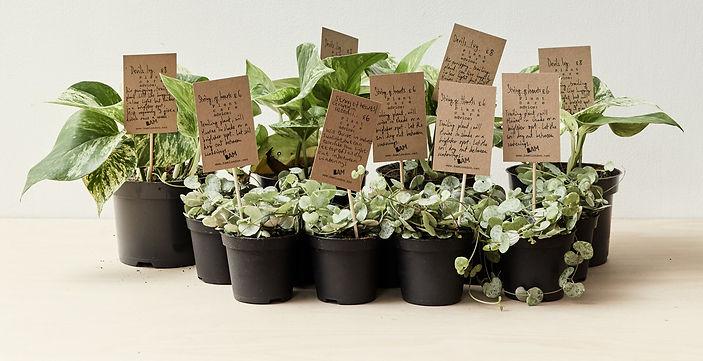 BAM botanics houseplant delivery.jpg