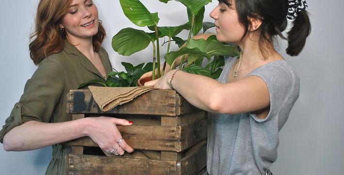 BAM botanics south east london