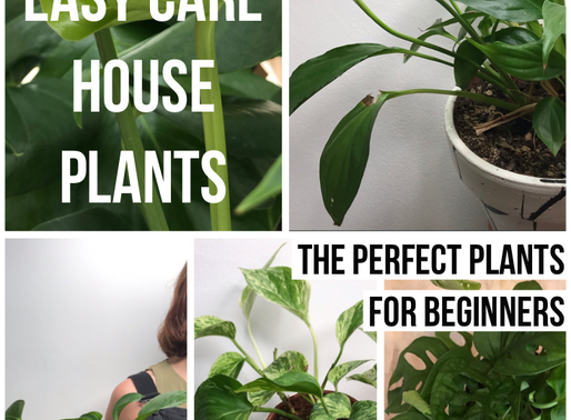 Easy care house plants for beginners