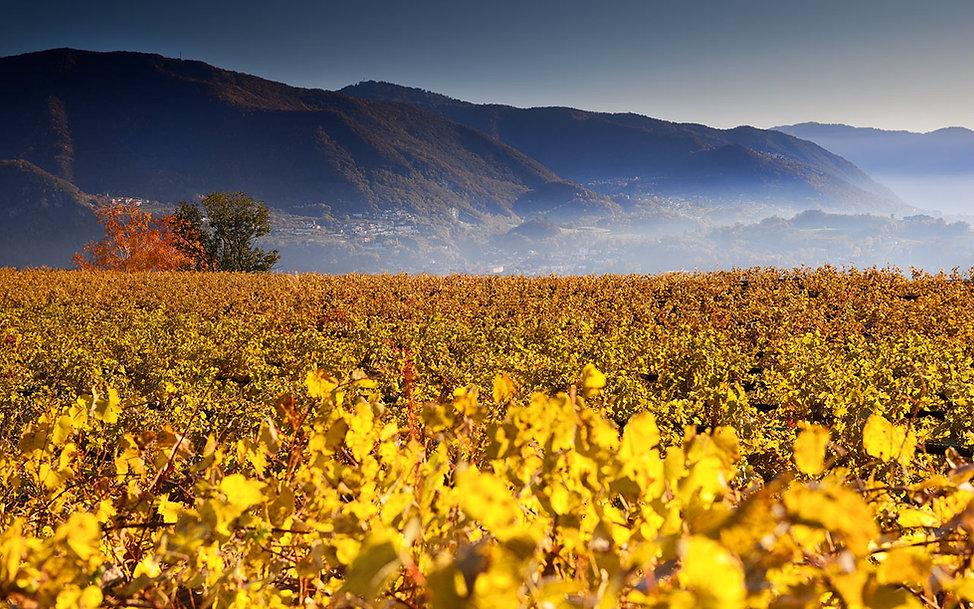 Agriloro Background.jpg