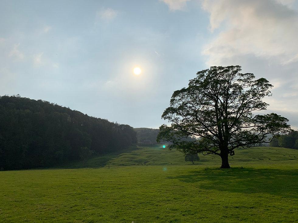 tree whitewell.jpg