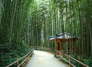 Juknokwon-Bamboo-Garden-625x416.jpg