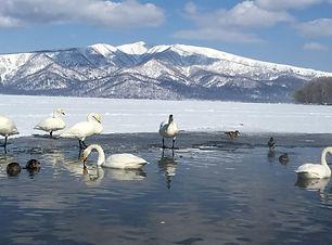 White Swan lake.jpg