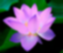 Flower 1.png