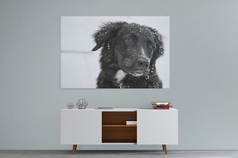 Custom Pet Portrait To Canvas, Pet Memorial Gifts For Pet Owners