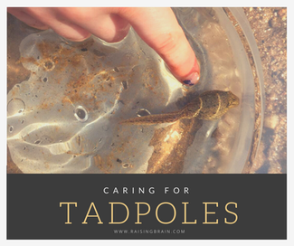 Caring for Tadpoles