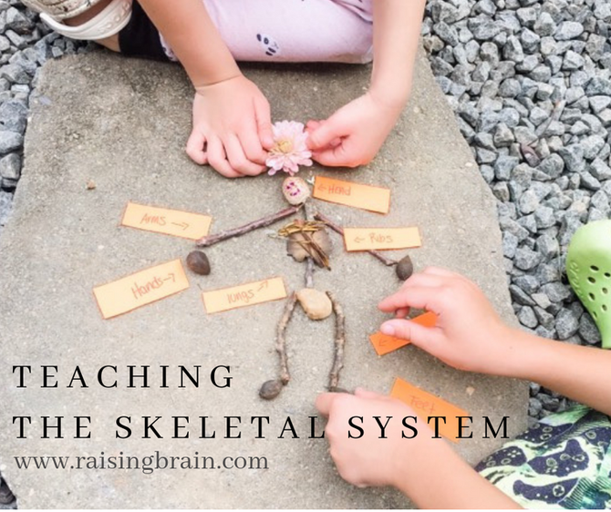 Activities for Teaching the Skeletal System